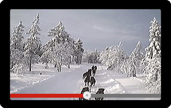 Screen showing a video of a Dog Sled Race