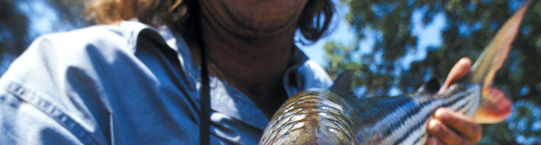 Titelbild mit Tigerfish